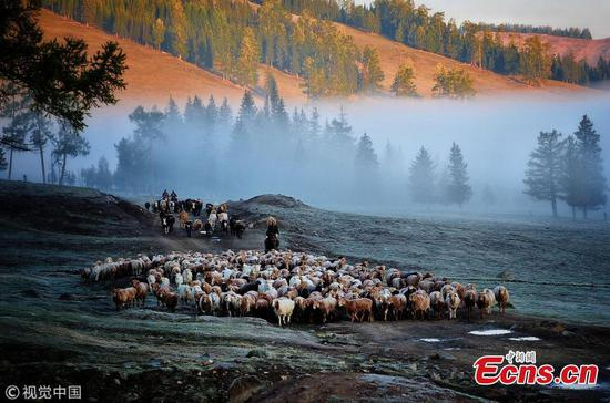 Incredible seasonal livestock migration in Xinjiang