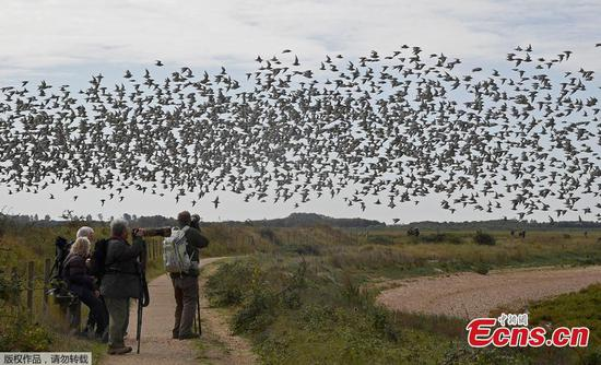 Thousands of birds flock to British estuary during tides