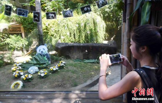 A girl takes photos of the panda house where the giant panda Basi lived.  (File photo/China News Service)