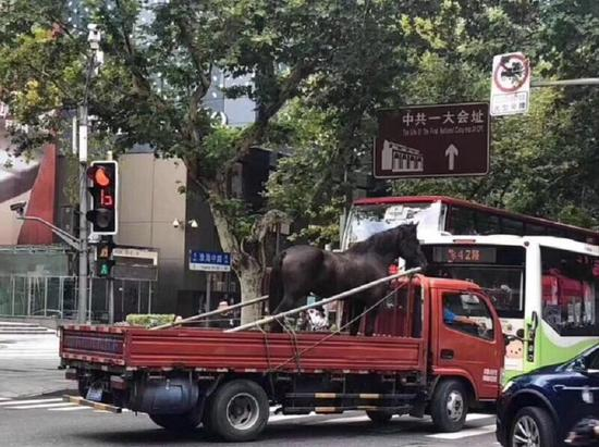 The horse is driven to Shanghai's related institutes. /Photo via Xinmin Evening News