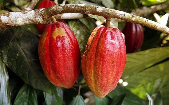 Ghana Cocoa Board tries to tap Chinese market