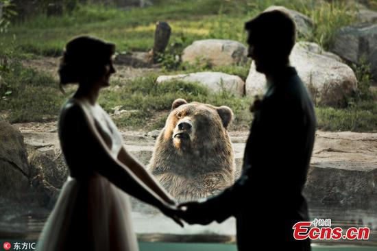 Bear hilariously photobombs couple's zoo wedding photos