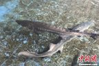 Major fish species decline by 90% in Yangtze, others face extinction
