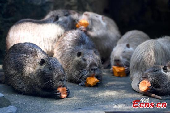 Animals receive treat before Mid-Autumn Festival