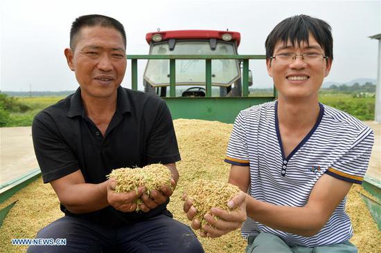 水稻种植者在江西省南昌市收获中季水稻