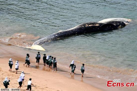 Whale carcass washes up on Sydney beach