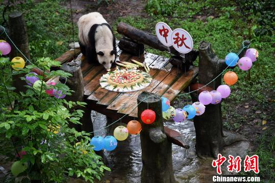 World's oldest captive giant panda enjoys mooncake at Mid-Autumn Festival