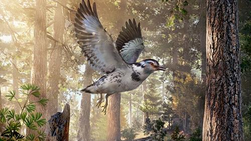Chinese scientists identify extinct bird species 127 mln yrs ago