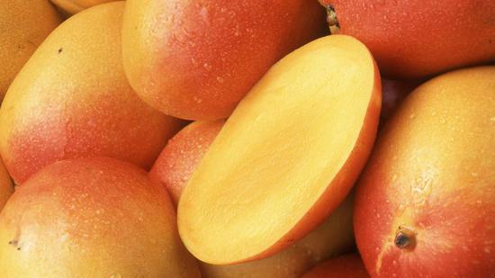 Mango peels hold secret to clean oil pollution: Australian study