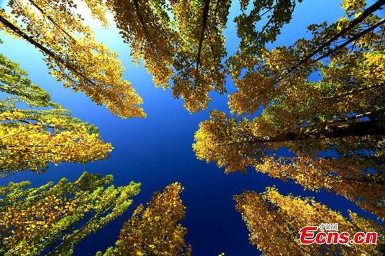 China's northwestern Hexi Corridor shows natural charms