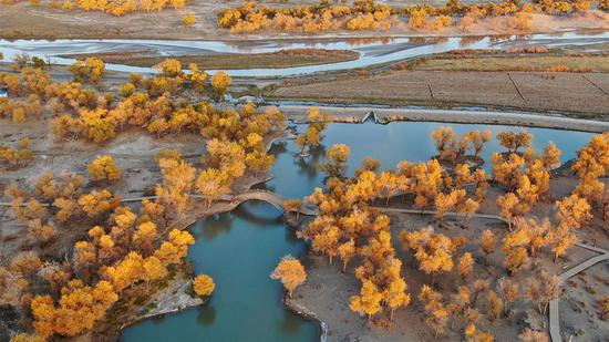 Charming autumn scenery in N China's Ejin Banner