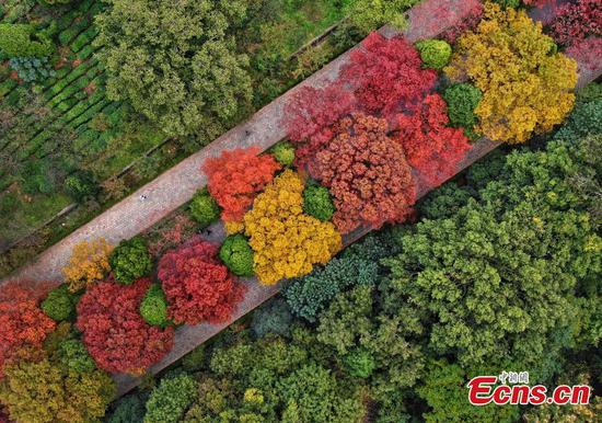 Great autumn foliage at Ming Xiaoling Mausoleum