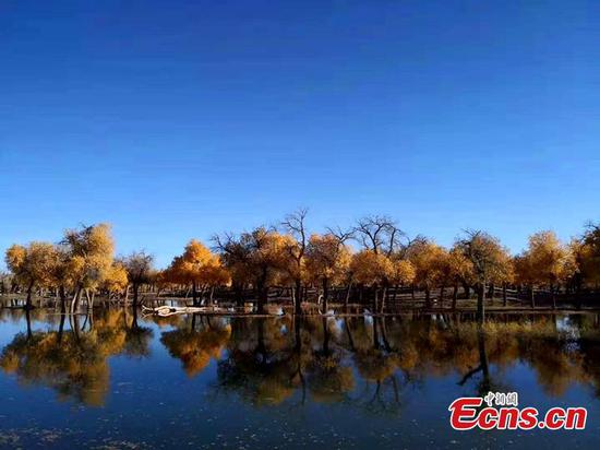 Best time to visit Inner Mongolia forest
