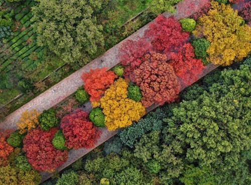 Great autumn foliage at Ming Xiaoling Mausoleum