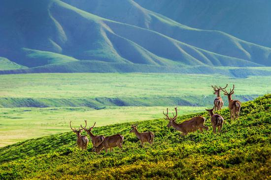 Qilian Mountain, a fairyland in autumn