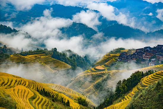 Picturesque views of terraced rice fields in Guangxi Zhuang autonomous region