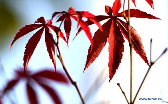 美丽的秋天的树叶在中国江苏