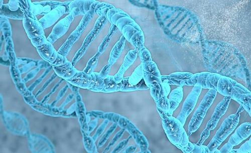 Genetic study tells how long people potentially live