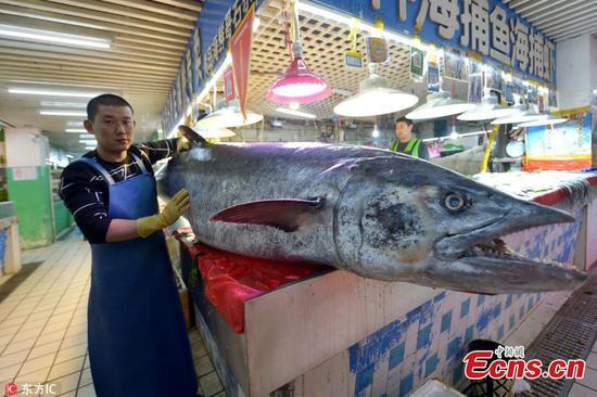 在黄海中捕获的大鱼