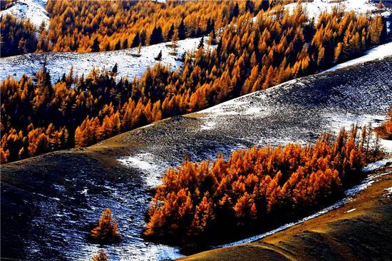 秋天的颜色照亮了中国西北地区的一片森林