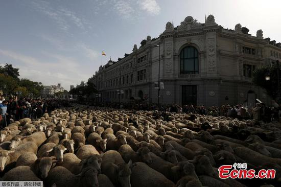 羊取代马德里市中心的交通