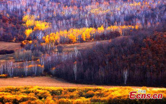 Splendid autumn scenery in Hulun Buir
