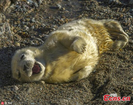 Cute grey seal enjoys sun bath