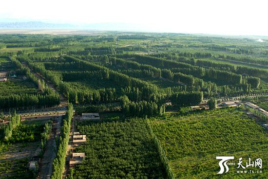 China claims world's planted forest record