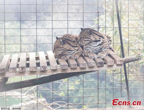 厄瓜多尔市发生火灾后撤离了动物园的动物