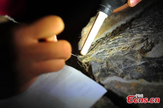 研究人员发现了2.47亿年前的爬行动物化石