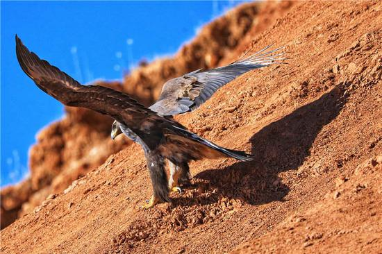 Paradise of wild animals in Gansu