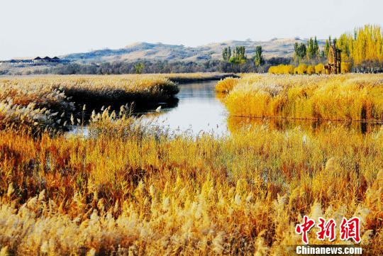 A wetland park in Yinchuan, northwest China's Ningxia Hui Autonomous Region.  (Photo provided to China News Service)