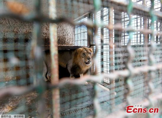 Animals rescued from Albanian zoo