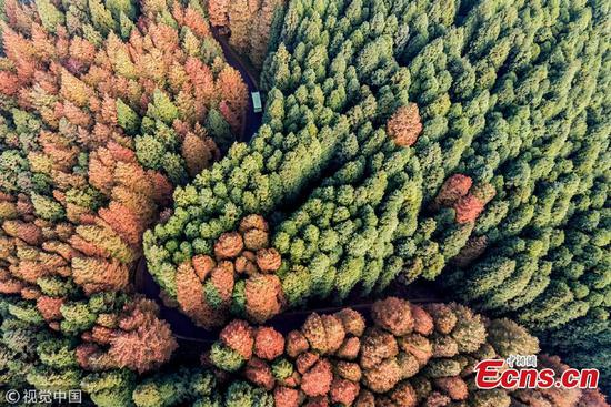 Autumn colors at Chongqing park attract tourists