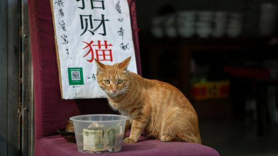 'Lucky cat' charms restaurant patrons in Xi'an