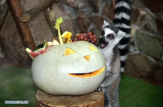 Halloween celebration for animals held in Zoo 'Limpopo' in Russia