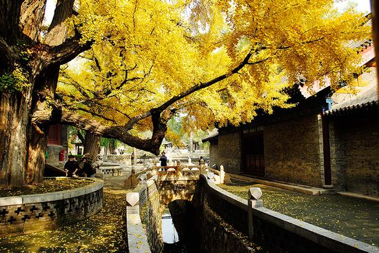 Fall leaves add color to Jinci Temple