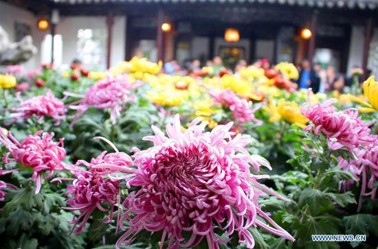 Chrysanthemum exhibition opens in Suzhou