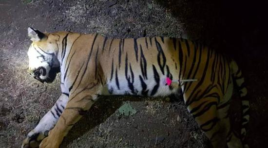 Man-eater tigress killed in India