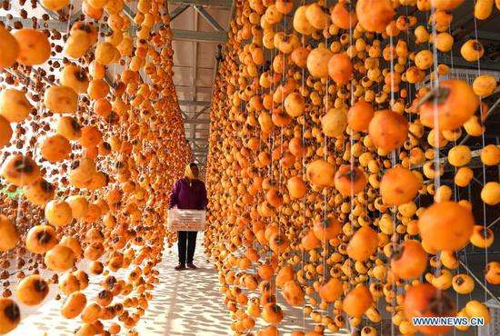 Farmers dry persimmons in Maquan Village, E China's Shandong