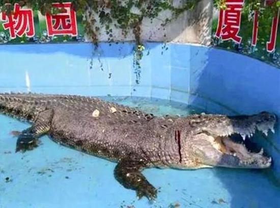 Tourists injure crocodile with hurled stones at China zoo