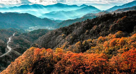 Golden autumn in Mazongling National Nature Reserve, Anhui Province