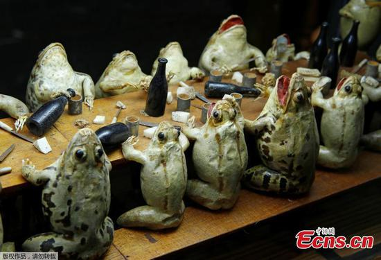 Take a look at Switzerland's wacky frog museum