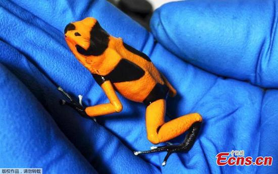 Colombian authorities intercept shipment of poisonous frogs