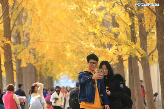 People enjoy leisure time under ginkgo trees across China