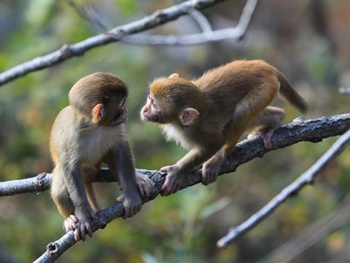 Monkeys play at Huaguo Mountain Scenic Area in Lianyungang