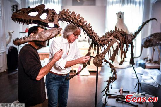 Dinosaur skeletons reconstructed ahead of Paris auction
