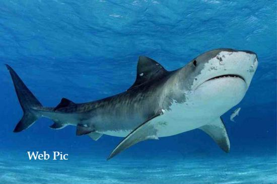 Fisherman survives giant shark attack off beach in Australia's Queensland