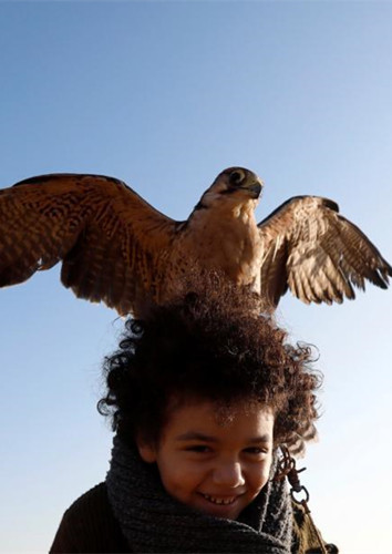 World Falconry Day: Eagle and falcons soar over desert show