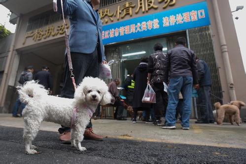 Chinese cities move to regulate irresponsible dog ownership